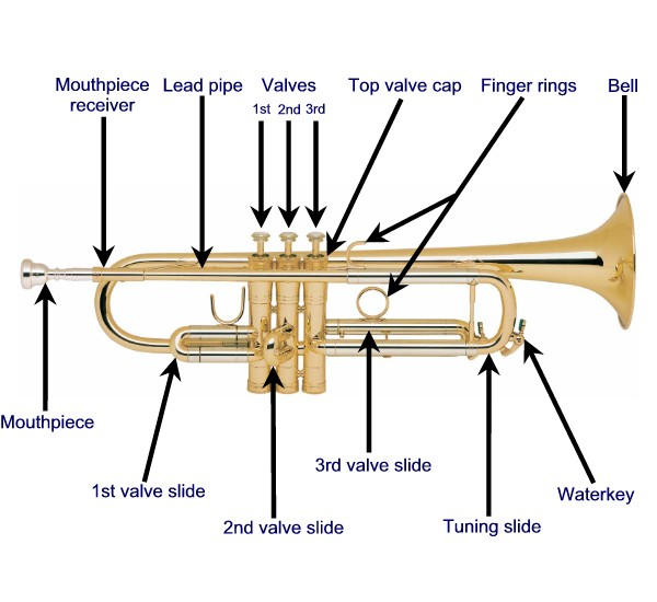 Anantomy2 a short overview of all the trumpet parts for the beginner player